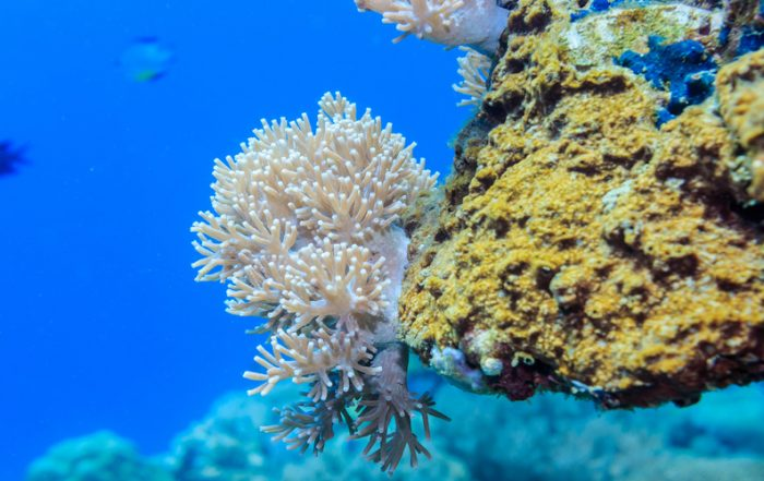 Consumers may be driving change in the sunscreen market as they learn about how chemicals in existing products can damage coral reefs.