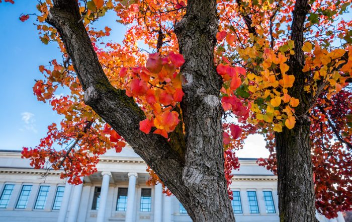 Answers to undergrad questions about Fall Semester 2020